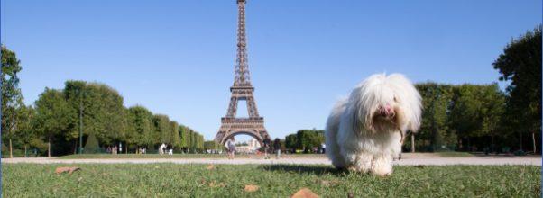 paris-best-dog-friendly-destinations-in-europe-copyright-yongyot-therdthai-european-best-destinations.jpg