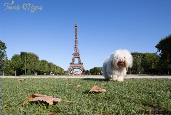 paris best dog friendly destinations in europe copyright yongyot therdthai european best destinations Best Travel Destinations With A Dog