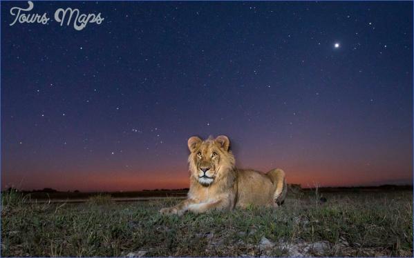 zambia liuwa plain national park lion 2018wtg1117 itokzii19ahk 50 Best Travel Destinations 2018