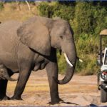 chobe national park namibia africa 310229 1100px 16x7 150x150 Experience World Class Level Safari in India