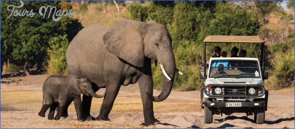 chobe national park namibia africa 310229 1100px 16x7 Experience World Class Level Safari in India