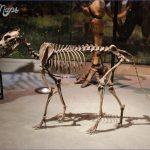 Perot_Museum_dire_wolf.jpg