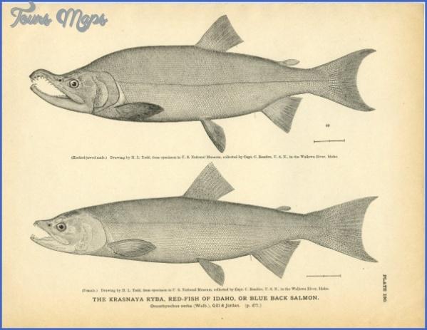 ryba museum 10 1 RYBA MUSEUM