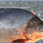 ryba museum 15 jpe 150x150 RYBA MUSEUM