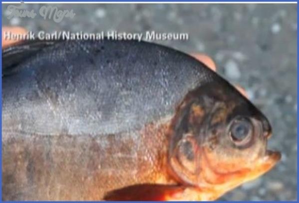 ryba museum 15 jpe RYBA MUSEUM