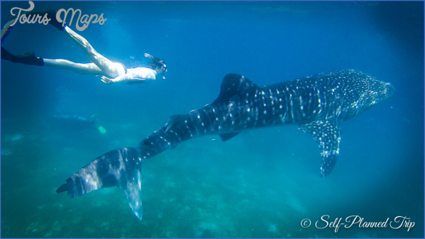 selfplannedtrip whale sharks 14 What to Expect While You Trip to Cebu in the Philippines?
