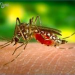 zika en la maravillosa ciudad 7 150x150 Zika en la maravillosa ciudad