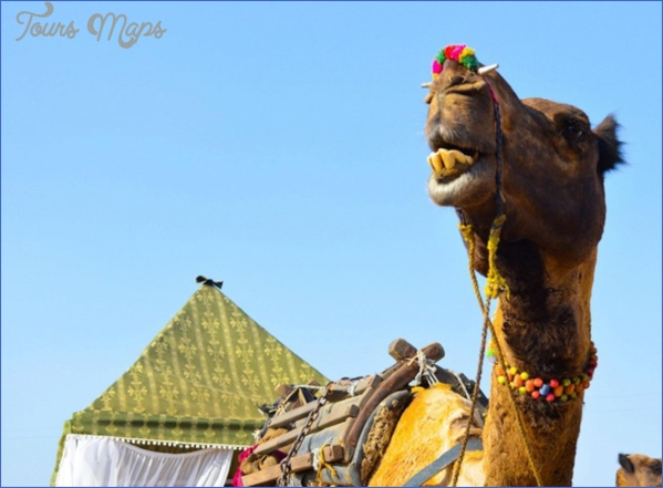 pushkar camel fair 2018 and pushkar lake aarti ceremony on ghats steps india  17 Pushkar Camel Fair 2018 and Pushkar Lake Aarti Ceremony on Ghats steps India