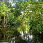 450 480311415 amazon jungle 150x150 The Hunger Games Mockingjay   Amazon Brazil