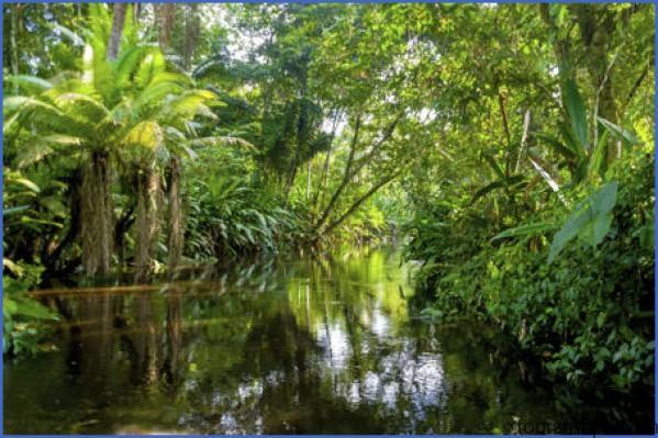 450 480311415 amazon jungle The Hunger Games Mockingjay   Amazon Brazil