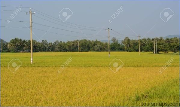 81660260 rice field at autumn in mekong delta vietnam the mekong delta is a rich lush area where the mighty m The Mighty Mekong   Mekong Delta Vietnam