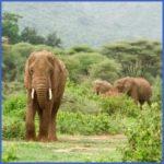 africatanzanialakemanyaranationalparkelephants123 150x150 Africa Safaris, and travel   Botswana Zimbabwe Zambia