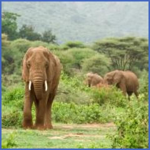 africatanzanialakemanyaranationalparkelephants123 Africa Safaris, and travel   Botswana Zimbabwe Zambia