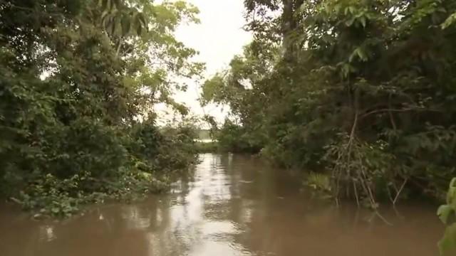 amazon river cruise 2016 hd 12 Amazon River Cruise