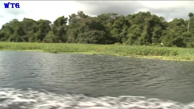 amazon river tourism vacations hd1080p 03 Amazon River tourism vacations