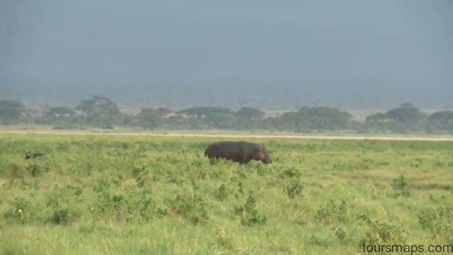 amboseli national park kenya 9 Amboseli National Park Kenya