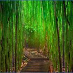 bamboo forest 150x150 THE MOST BEAUTIFUL PLACE IN THE WORLD   HAWAII