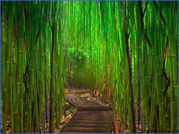 bamboo forest THE MOST BEAUTIFUL PLACE IN THE WORLD   HAWAII