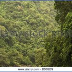 barron gorge rainforest cairns queensland australia d53g2n 150x150 JUNGLE QUEEN Cairns Australia