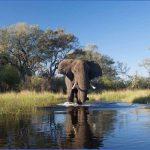 botswana 150x150 Africa Safaris, and travel   Botswana Zimbabwe Zambia