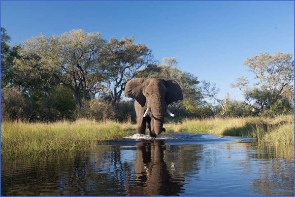 botswana Africa Safaris, and travel   Botswana Zimbabwe Zambia