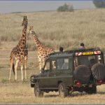 budget safaris uganda packages large 150x150 Africa Tours   Kenya Tanzania
