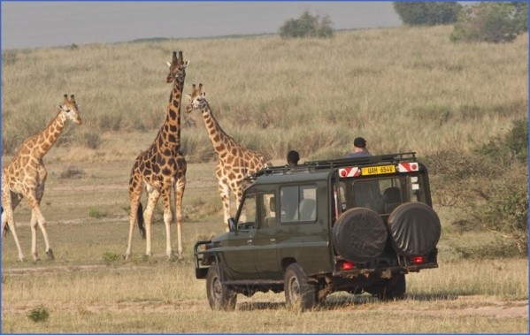 budget safaris uganda packages large Africa Tours   Kenya Tanzania