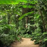 c fakepath tour cairns all encompassed lead 150x150 JUNGLE QUEEN Cairns Australia