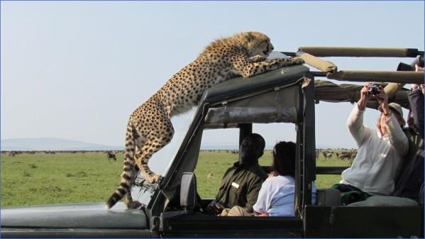 cheetah-masai-mara.jpg