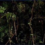 eee3dbc98910db075a314b61571e6791 150x150 The Hunger Games Mockingjay   Amazon Brazil