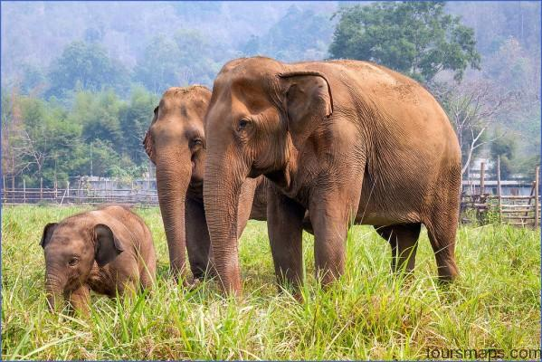 elephant-nature-reserve-XL.jpg