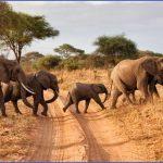 herd of elephants africa overland safaris africa lodge safaris africa tours on the go tours 256241422631671 crop 683 341 150x150 Africa Safaris, and travel   Botswana Zimbabwe Zambia