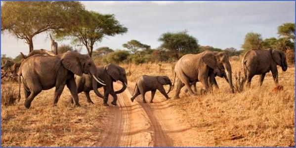herd of elephants africa overland safaris africa lodge safaris africa tours on the go tours 256241422631671 crop 683 341 Africa Safaris, and travel   Botswana Zimbabwe Zambia
