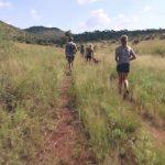 lion walks tiger feedings south africa 05 150x150 LION WALKS TIGER FEEDINGS South Africa