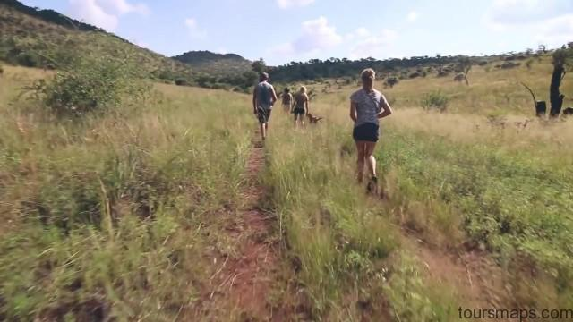 lion walks tiger feedings south africa 05 LION WALKS TIGER FEEDINGS South Africa