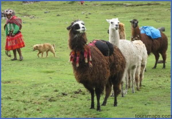 llama trek peru LAMA RIDES Peru