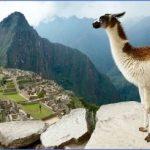 llama trek 150x150 LAMA RIDES Peru