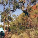 lost in the outback uluru australia 15 150x150 LOST in the OUTBACK Uluru Australia