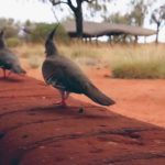 lost in the outback uluru australia 19 150x150 LOST in the OUTBACK Uluru Australia