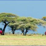 MasaiUnderAcaciaTreesAfrica-263291432042996_crop_683_341.jpg