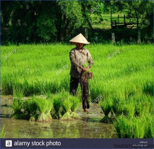 mekong delta vietnam sep 2 2017 a woman working on rice field in mekong krpjj3 The Mighty Mekong   Mekong Delta Vietnam
