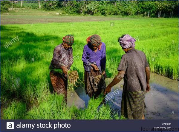 mekong delta vietnam sep 2 2017 farmers working on rice field in mekong krpjm8 The Mighty Mekong   Mekong Delta Vietnam