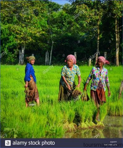 mekong delta vietnam sep 2 2017 khmer women working on rice field k4atp7 The Mighty Mekong   Mekong Delta Vietnam