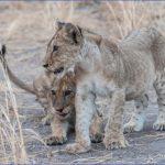 nl001 150x150 Africa Safaris, and travel   Botswana Zimbabwe Zambia