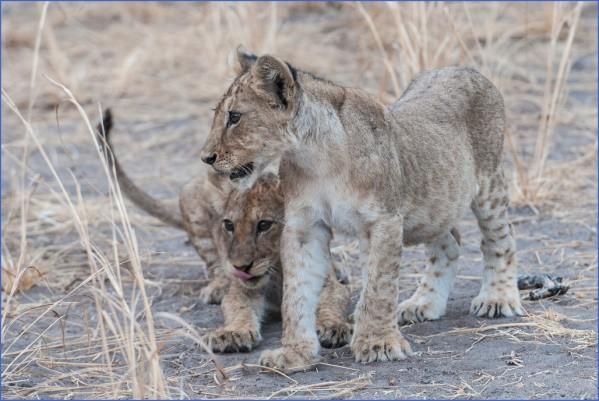 nl001 Africa Safaris, and travel   Botswana Zimbabwe Zambia