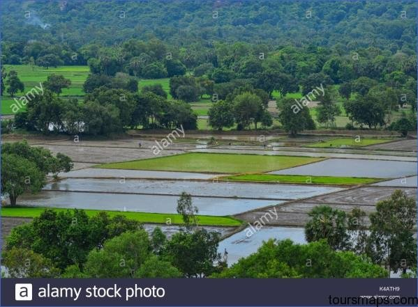 people working on rice field in mekong delta vietnam the mekong delta k4ath9 The Mighty Mekong   Mekong Delta Vietnam
