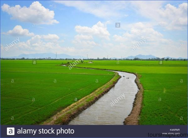 rice field at summer in mekong delta southern vietnam the mekong delta k4arnr The Mighty Mekong   Mekong Delta Vietnam