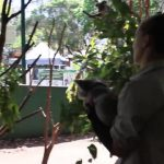 that time i held a koala byron bay australia 06 150x150 THAT TIME I HELD A KOALA Australia