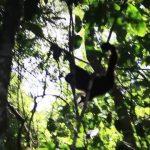 the devils throat iguassu falls brazil 17 150x150 Iguassu Falls Brazil