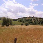 vino vidi vici tuscany italy 12 150x150 VINO Vidi Vici Tuscany Italy